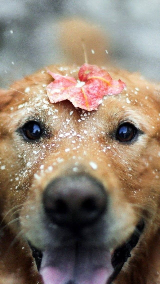 A very Beautiful Dog's Gallery