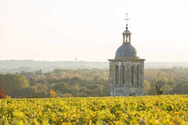 Vignoble de Vouvray : Touraine, entre vignobles et châteaux - Linternaute