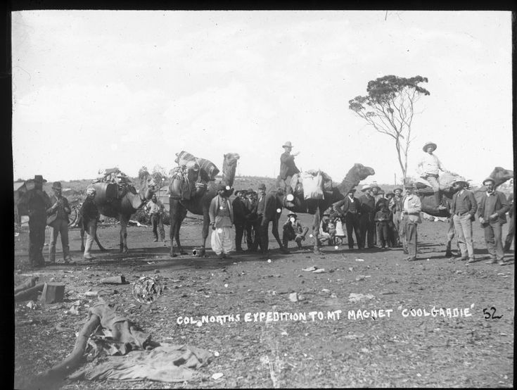 090461PD: Colonel North's proespecting party, with camels and Afghan handlers, leaving Coolgardie for Mount Magnet, 1894.  http://encore.slwa.wa.gov.au/iii/encore/record/C__Rb4715120__SAfghans%20--%20Western%20Australia%20--%20Coolgardie%20--%20Photographs.__P0%2C13__Orightresult__X1?lang=eng&suite=def