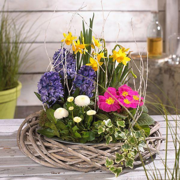 Pflanzideen: Frühlingsblüher: grün erleben  – decorating ideas