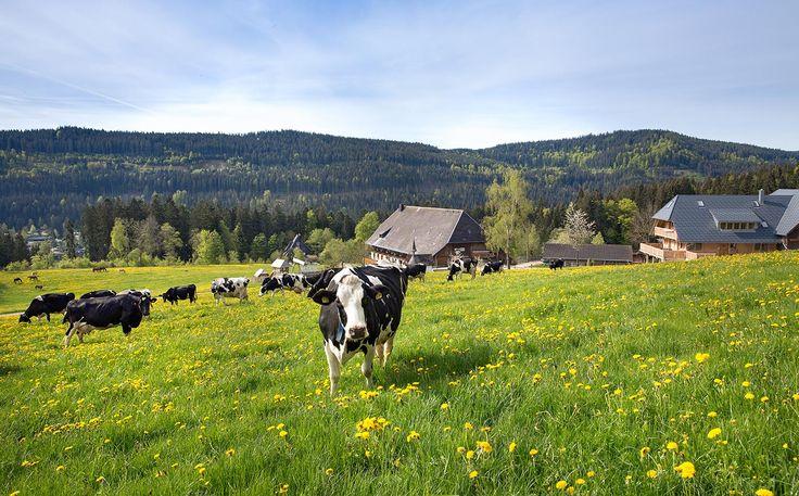 Sommer auf dem Weberhof - Ferienwohnungen auf dem Bauernhof in Hinterzarten am Titisee Schwarzwald
