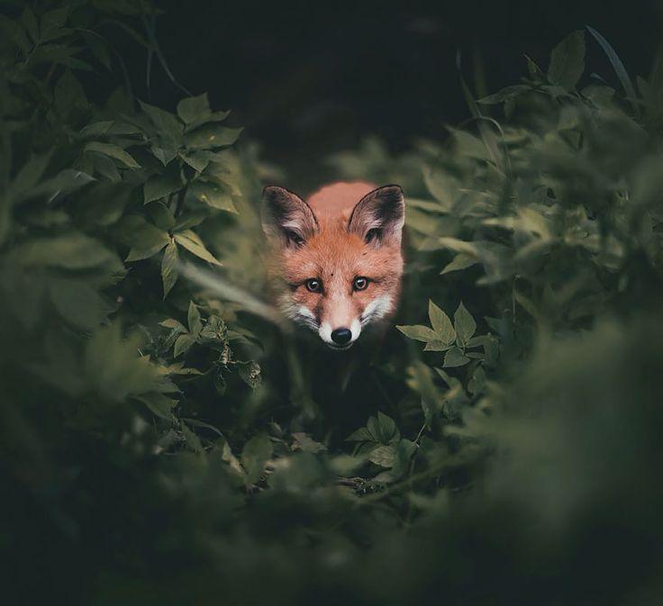 fotos-alimentando-animales-salvajes-finlandia-konsta-punkka-2 (4)