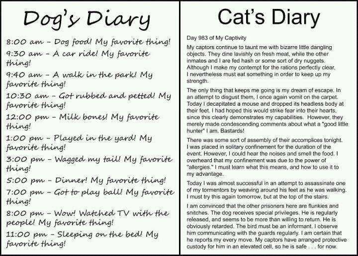 Dagboek hond en kat