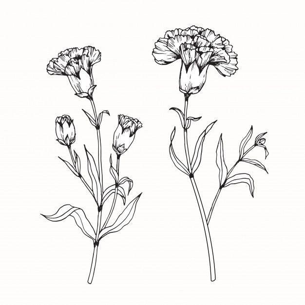 Nelkenblumenzeichnung Illustration In 2020 Flower Drawing Carnation Flower Tattoo Flower Tattoo Drawings