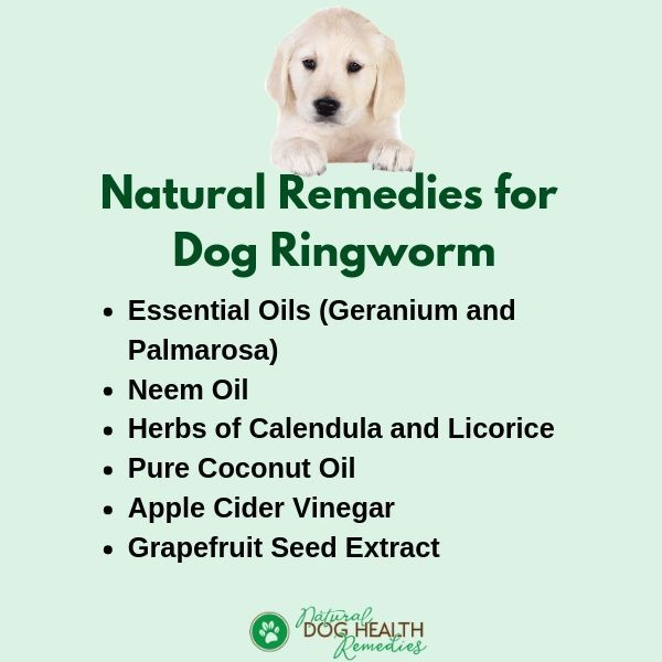 Natural Dog Ringworm Remedies Ringworm Remedies Home Remedies