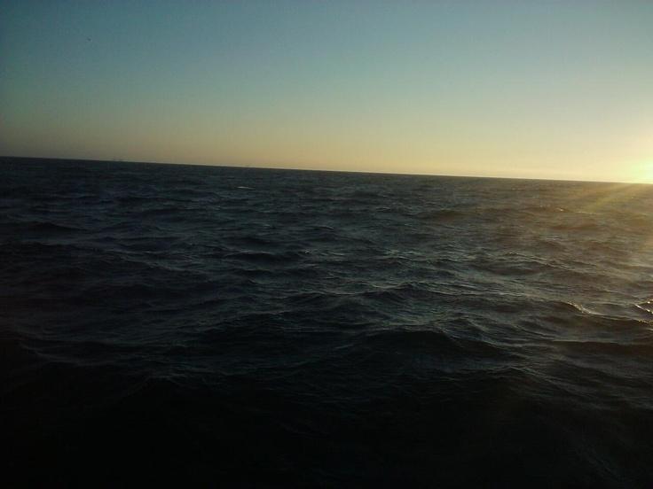 Deep sea fishing off newport balboa beach with a for Deep sea fishing newport