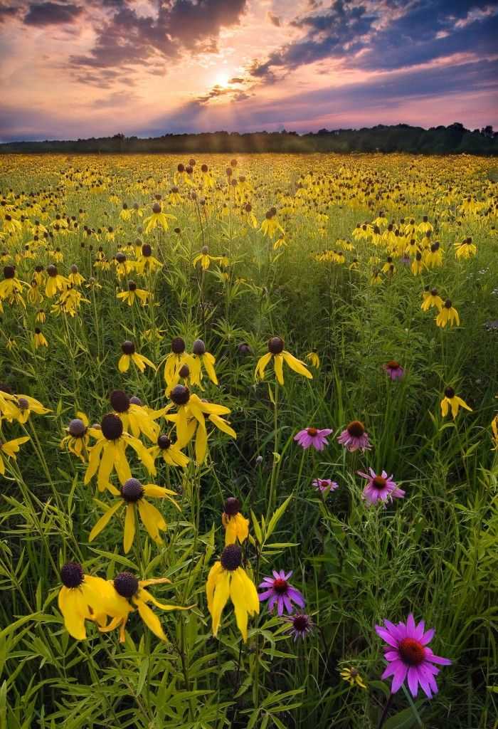 Prophetstown State Park So Beautiful Hiking Pinterest Tennessee Red River Gorge And