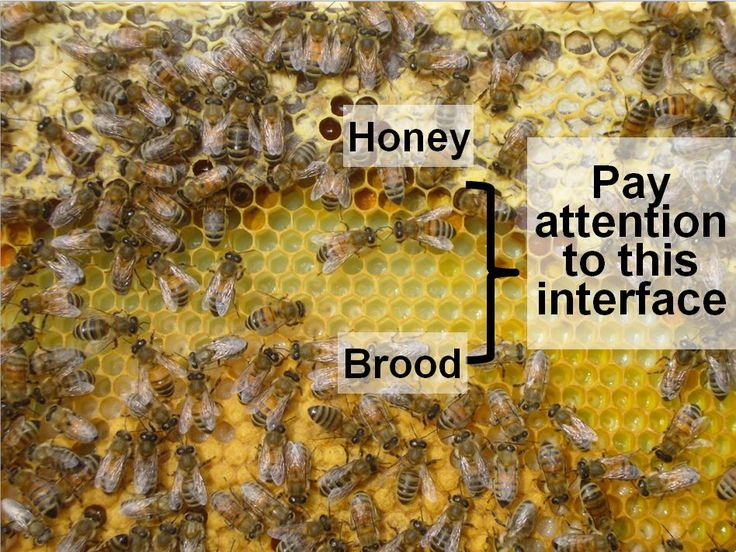 First Year Care For Your Nuc @ Scientific Beekeeping