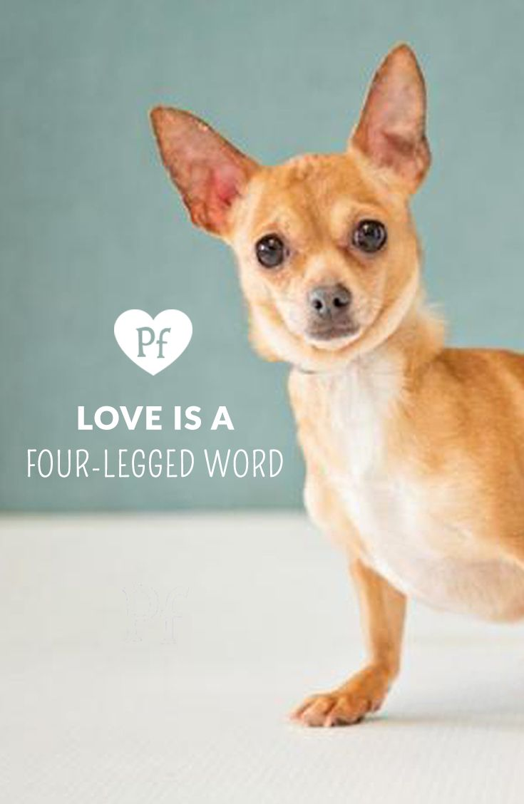 Love really is all you need Search for someone to love on Petfinder