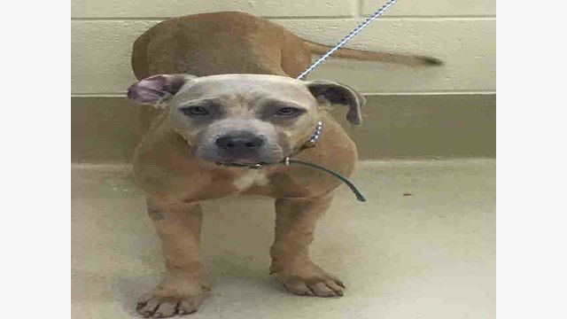 A003907 Asher Urgent Kill List For Space Clayton Co Ac By Partners For Pets Inc Kill List Dog Adoption Rescue Dogs