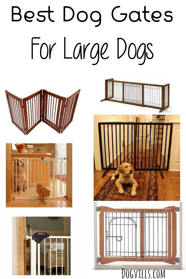 finding it hard to choose a dog gate for a large dog read our list - Puppy Gates