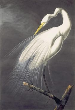 Audubon's Aviary: Part I of the Complete Flock | New-York Historical Society March 8-May 19