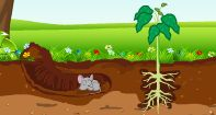 What is soil video: The soil is also an example of a natural resource. It has living, non- living and dead  things. The soil has several layers - Bedrock, Parent rock, Subsoil, Topsoil.