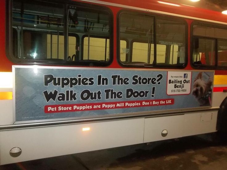 Puppies in the store? Walk out the door. Bus ad. Pet