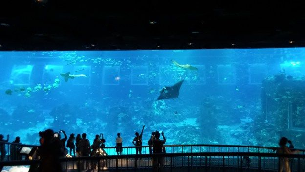 Review of S.E.A. Aquarium on Sentosa Island in Singapore by Wilson Family  Travel Blog