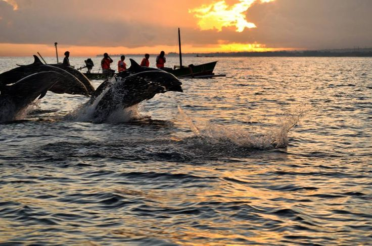 BALI Trip this coming SEPTEMBER during SCHOOL HOLIDAYS!!!  GET YOURSELF A 4 DAYS 3 NIGHTS BALI DOLPHIN WATCHING TOUR PACKAGE NOW!!!!!  https://www.facebook.com/photo.php?fbid=766238186741260&set=a.696947950336951.1073741829.674445445920535&type=1&theater