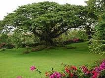 Reino vegetal. Árboles de gran poste.
