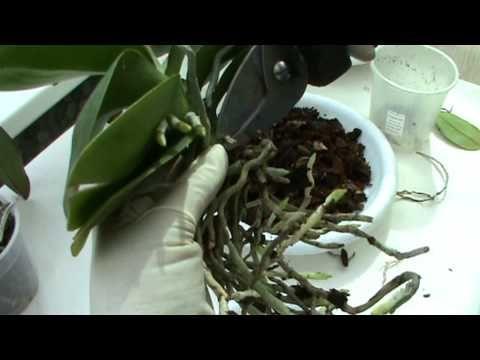 Пересадка орхидей - YouTube
