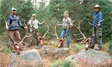 Elk Hunting | Deer Hunting | Idaho Hunting | Elk Hunt | Hunting ...
