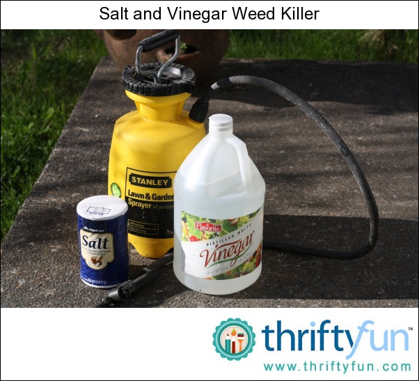 Best Natural Weed Killer Recipe