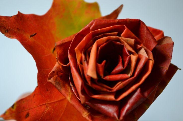 Rozen van esdoorn bladeren maken. Bron en werkuitleg : solarpoweredkate.wordpress.com