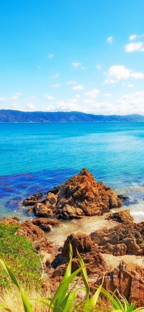 New Zealand, Wellington - tour photo of Coastline