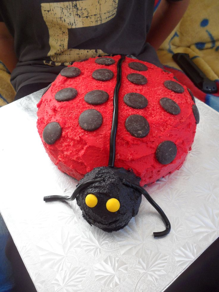 Lady bug cake - Jett made this for his aunty