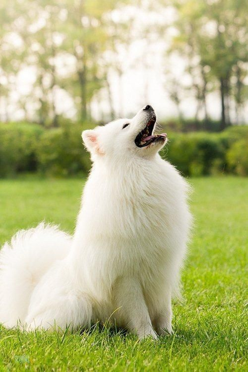 """They can really rock the """"wolf look"""". 