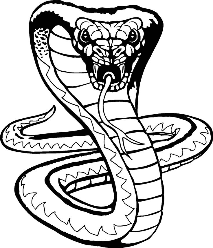 Large Shelby Car Logo further Car Coloring together with Oak Baseboard further Wholesale Cartoon Cobra besides Autocollant Ford Mustang Cobra Logo 32883. on ford cobra super snake