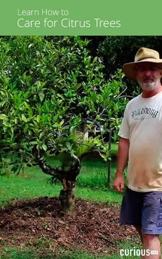 Is your citrus tree looking a little sad? Learn how to diagnose and reverse nutrient deficiencies in citrus trees with this gardening lesson.