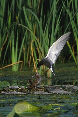Wetlands photography ideas from EPA. Great inspiration for ...