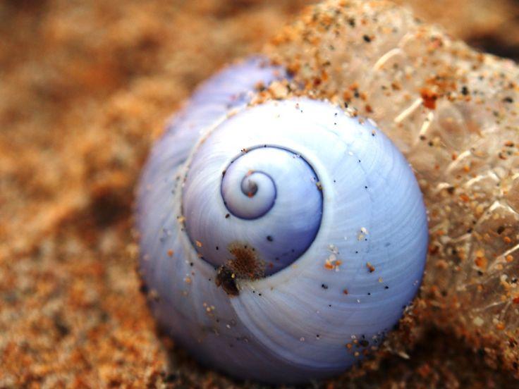 Purple Spiral Shell (ii). By Erin Sheena Byrne. 18/05/2014