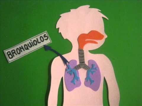 Respirar para vivir (sistema respiratorio) - YouTube
