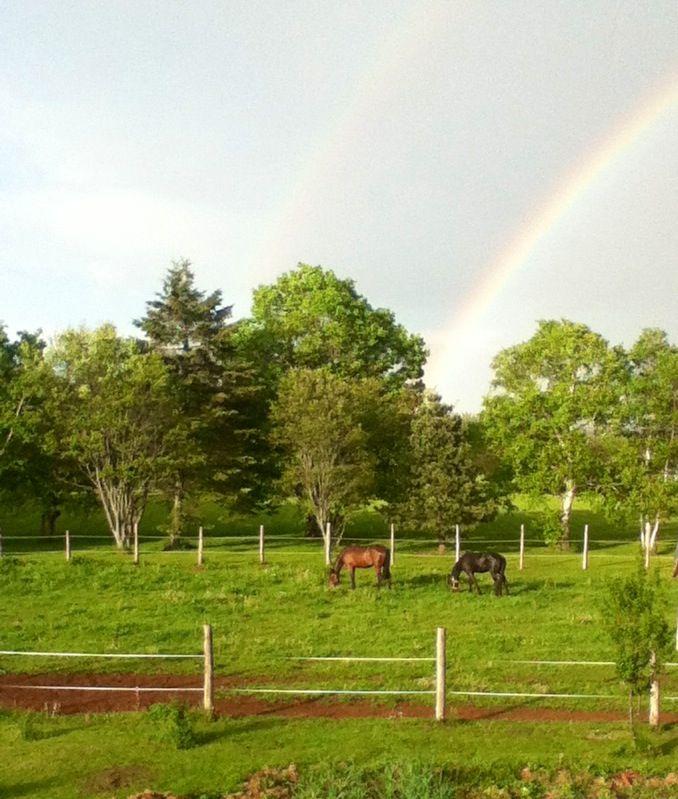 My horses and a rainbow