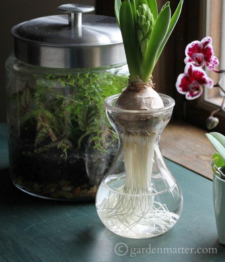 481 best images about indoor flowers plants on pinterest for Indoor gardening glasses
