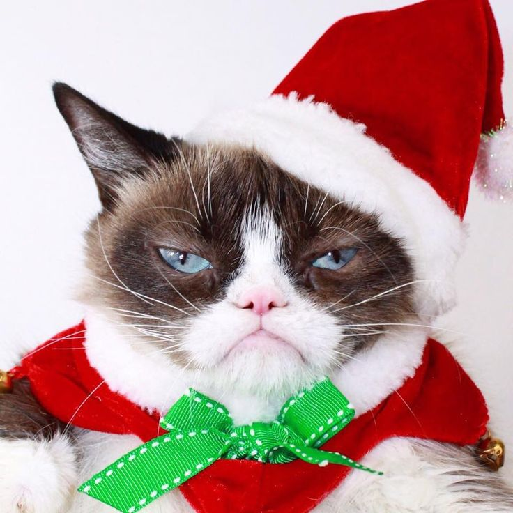 3e8dbf376a16a2acd34167ff46aba98f grumpy cat christmas merry christmas 167 best grumpy cat images on pinterest grumpy cat, kitty cats and