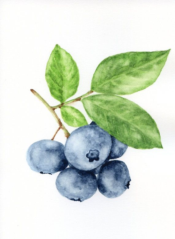 Blueberry Branch - ORIGINAL Small Painting (Fuits Watercolours Wall Art, Still Life)
