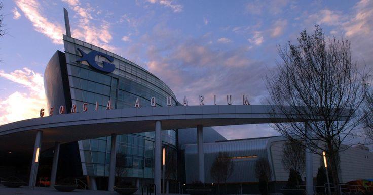 Dolphin trainer accused of abuse found dead in Spain - The Georgia Aquarium in Atlanta had planned to hire Jose Luis Barbero.