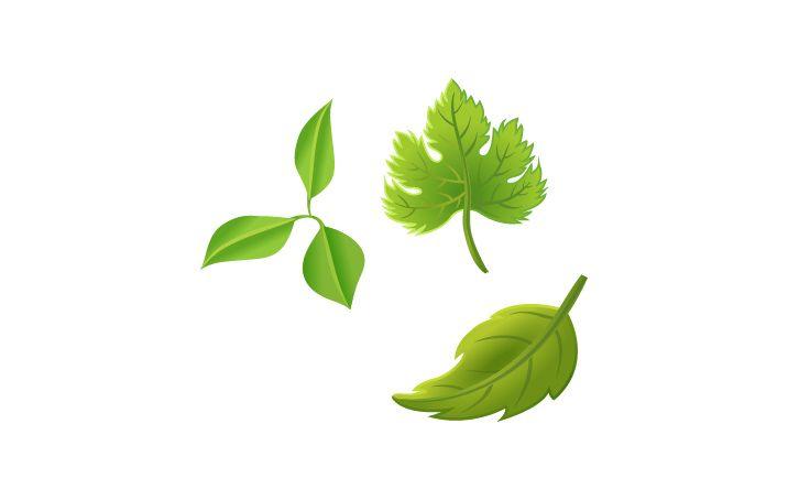 Leaf Cocktail Vector Image #leaf #summer #cocktails http://www.vectorvice.com/summer-cocktails-pack