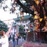 En China se cuelgan palitos de incienso en los árboles, para pedir deseos y hacer ofrendas