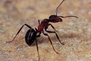 >> Remedios Caseros para las Picaduras de Insectos << Descubre aquí como Quitar el Dolor y tratar las #picaduras de hormigas, abejas y otros insectos con remedios caseros y naturales. SIGUE LEYENDO EN http://alimentosparacurar.com/remedios-caseros/n/1338/remedios-naturales-contra-las--picaduras-de-insectos.html