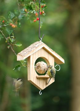 Apple/suet bird feeder