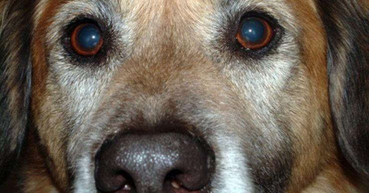 Diarrea con sangre en perros. La diarrea ocurre cuando un perro tiene más de cinco deposiciones en 24 horas. Por lo general, las heces son más abundantes y líquidas que de costumbre. Cuando la diarrea incluye sangre, es un claro indicio de que debes llevarlo al veterinario de inmediato. La diarrea con sangre en perros es señal de muchos problemas potencialmente letales.