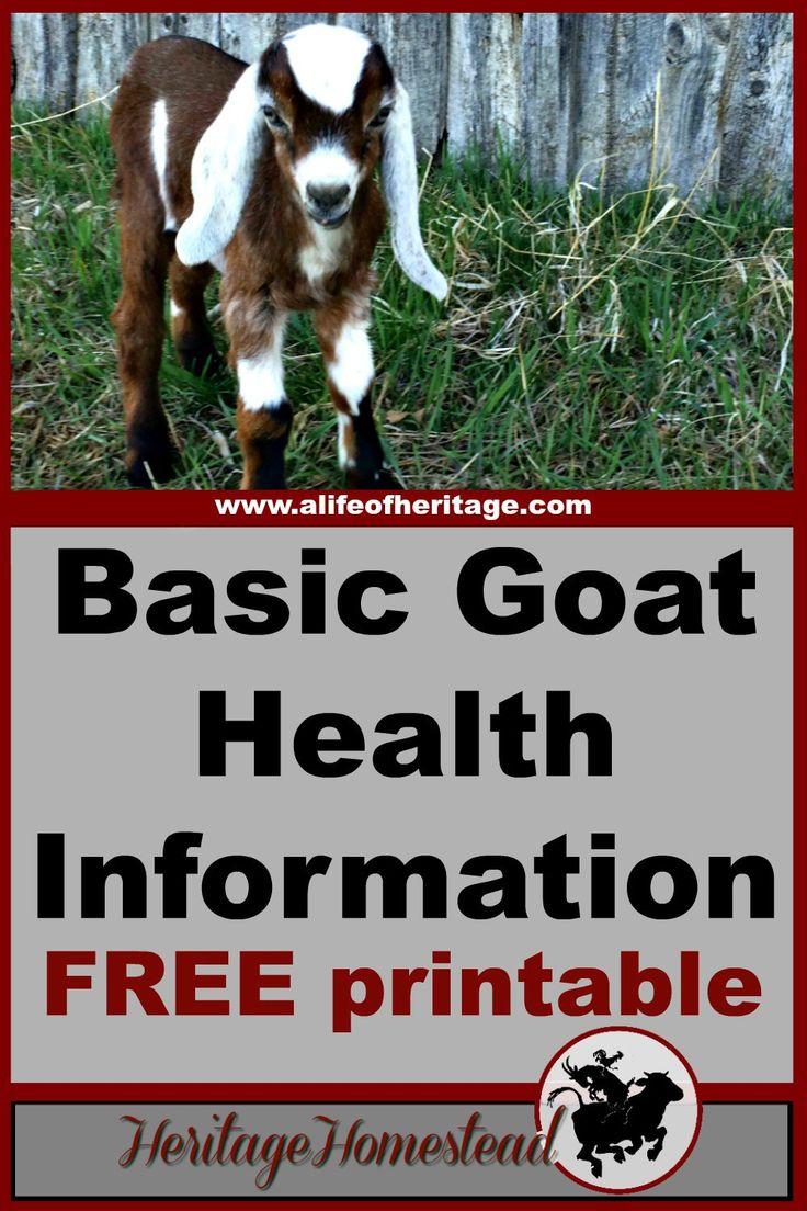 Goats   Goat Care   Goat Health   FREE Basic Goat Health Information, Upkeep and Health Tracker Printable. Keep track of your goats information on a regular basis.