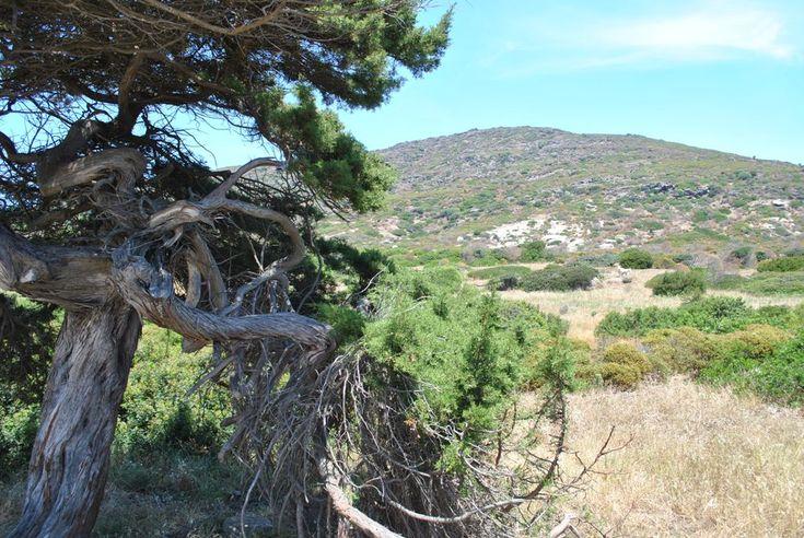 Meeting internazionale su ambiente e turismo a Stintino: 8 giugno 2013 scorcio dell'Asinara