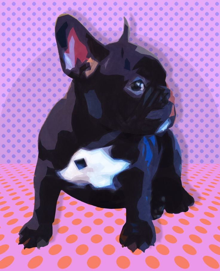 Faboo French Bulldog with Comic-Book Dots Background