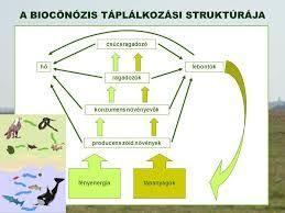 biocönózis - Google keresés