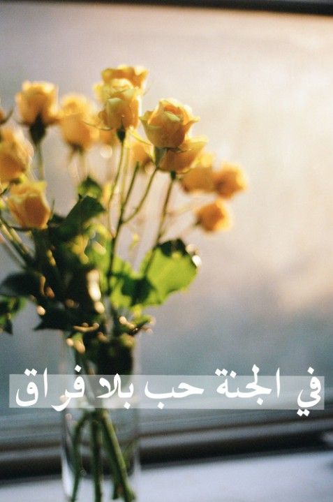 Love in Paradise Text: في الجنة حب بلا فراق Translation: In Paradise there is love without separation.