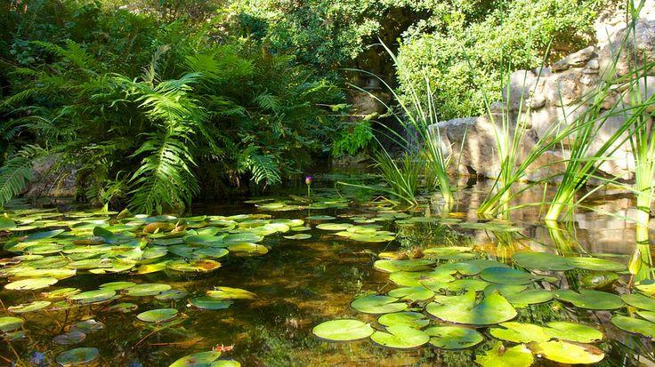アメリカテキサス州、静かで穏やかな空気に包まれたジルカー植物園は、午後の散歩にぴったりの場所です。