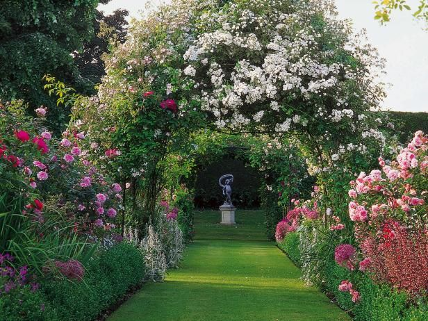 Learn how to plant roses with this step-by-step gardening guide from HGTV.